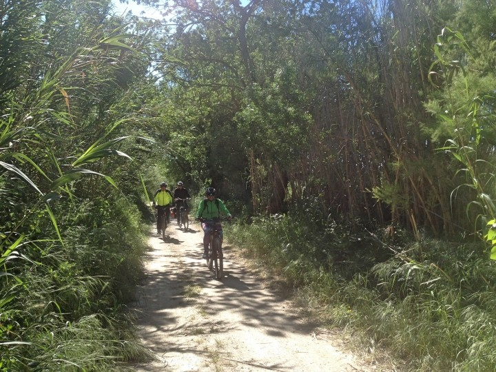 Salida en bicicleta: Aiguamolls