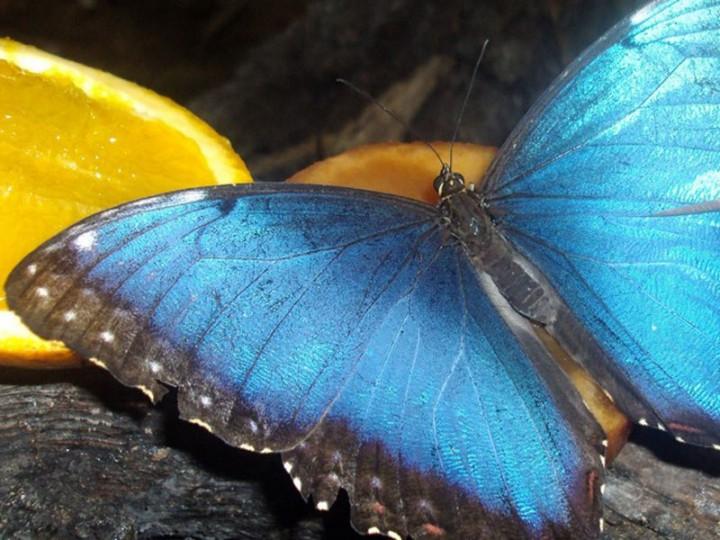 Butterfly Park Empuriabrava